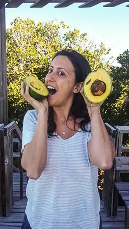 largest avocado